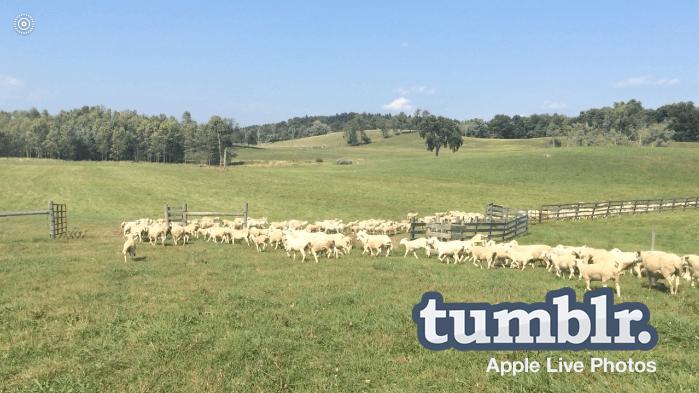 tumblr-apple-live-photos